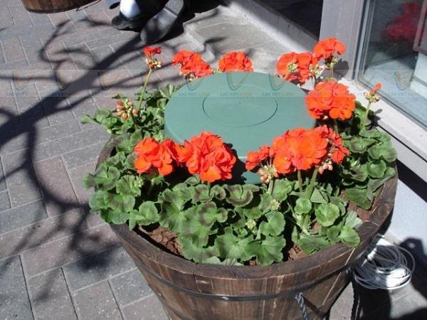 Loa Bose FreeSpace 51 có thể đặt trong chậu cây, sân vườn,...