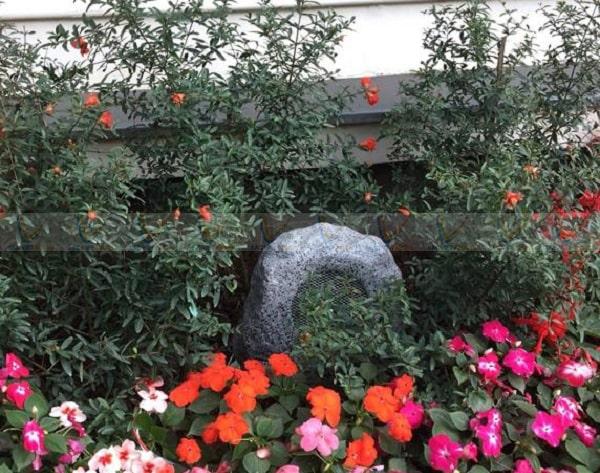 Loa DSP 647 được sử dụng trong các sân vườn gia đình